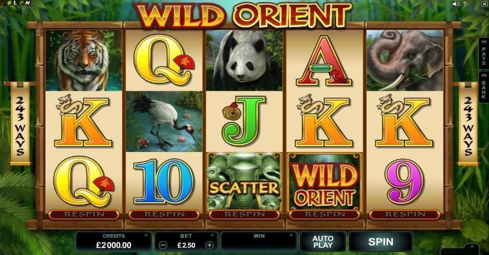 Обзор слота Wild Orient
